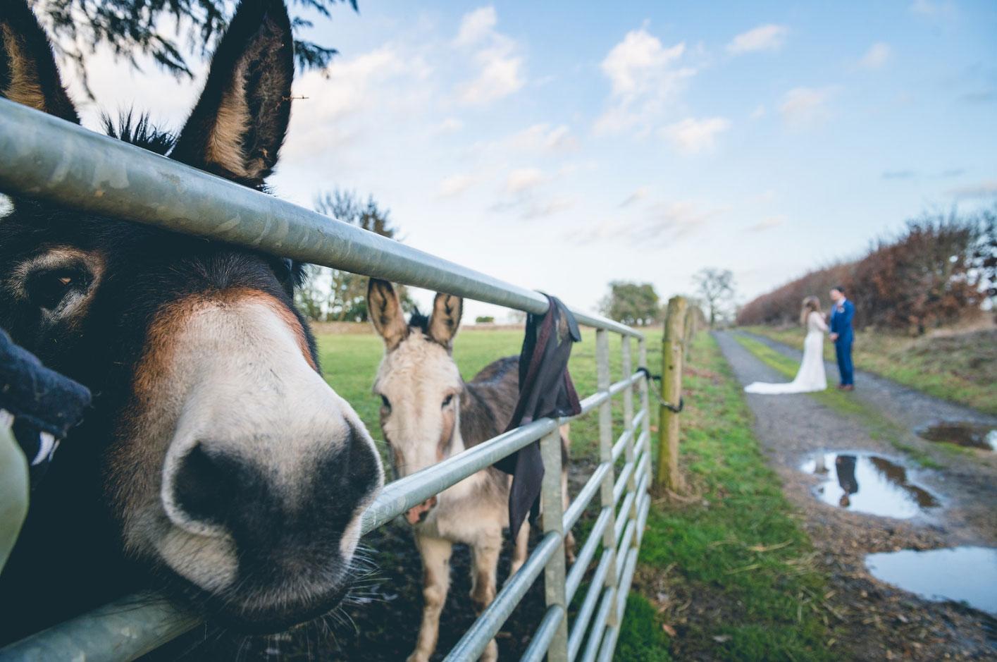 Donkeys Cotswold